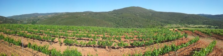 Viñedos - Sotoserrano 4 - Panorámica