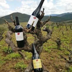 bodegas-4g-vinos-2