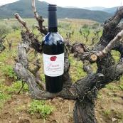 bodegas-4g-vinos-3